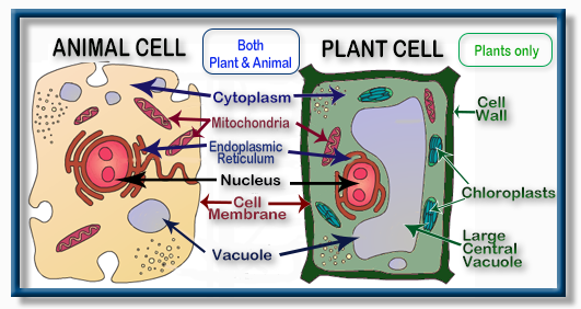 Structure of Plant cell and Animal cell